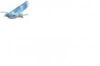 Летающая птица Taibao ZC11070